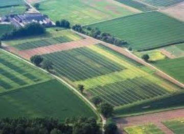 Изображение - Особенности аренды земли сельхозназначения у частных лиц и государства zemelniy