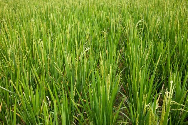 Договор аренды сельскохозяйственных земель - как можно арендовать землю у государства для фермерского или подсобного хозяйства?