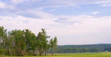 аренда лесной участок