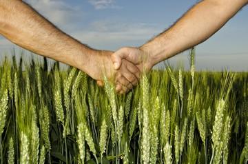 предварительный договор при покупке земли
