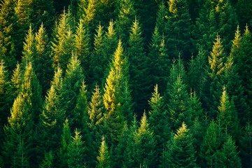 Ответственность за использование земель не по назначению