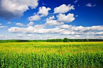 Виды права пользования землёй