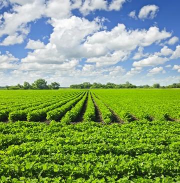 Предоставление земель сельскохозяйственного назначения