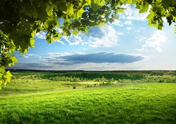 право на использование земельного участка