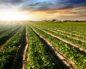 земли сельхозназначения